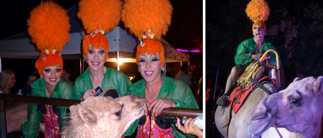 The Priscilla Spectacular hits the Camel farm at Uluru